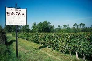 Le Domaine du Château Brown  Vendanges au Château Brown