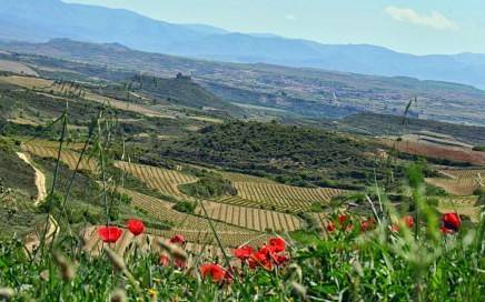 Rioja Fields