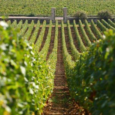 Wine Holidays in Burgundy