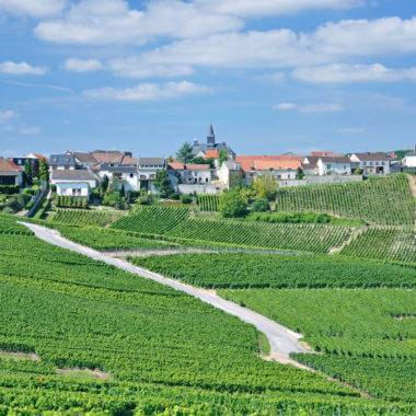 Champagne Tasting Experiences nr Reims and Epernay