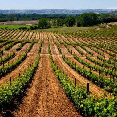 Ribero del Duero Wineries in Spain