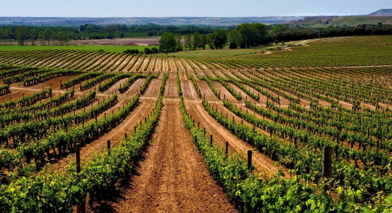 Ribera Del Duero Wine Tours And Wine Tasting Smoothred