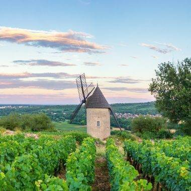 Luxury Wine Tours in France