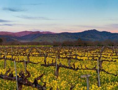 California Wineries & Napa Vineyards