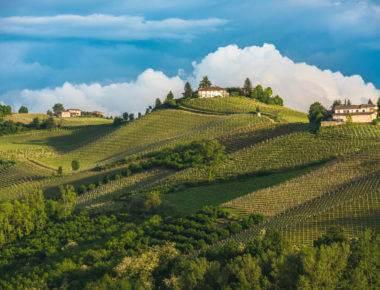 Wineyards of Langhe, Piedmont Wine Region