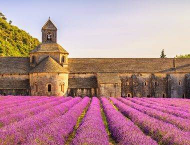 Wine Holidays Provence - Lavender fields