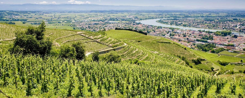 Rhone Wine Tasting Tours