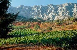 Provence-Vineyard