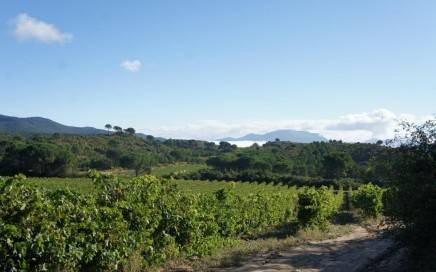 Riojan vineyards